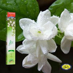 Find The Fragrance Contest! Lia Jasmin Incense Sticks