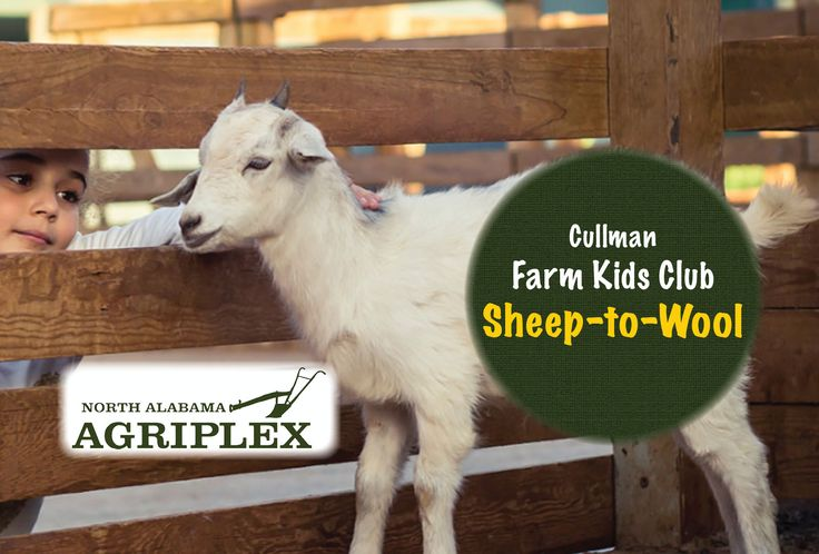 SHEEP-TO-WOOL: Cullman Farm Kids Club Class  This will be extremely cool ...  Today at the North Alabama Agriplex, children to learn about the exciting process of how wool becomes fabric!  This event is for ages 5 to 12, accompanied by an adult.  $5 per child, $10 max per family.