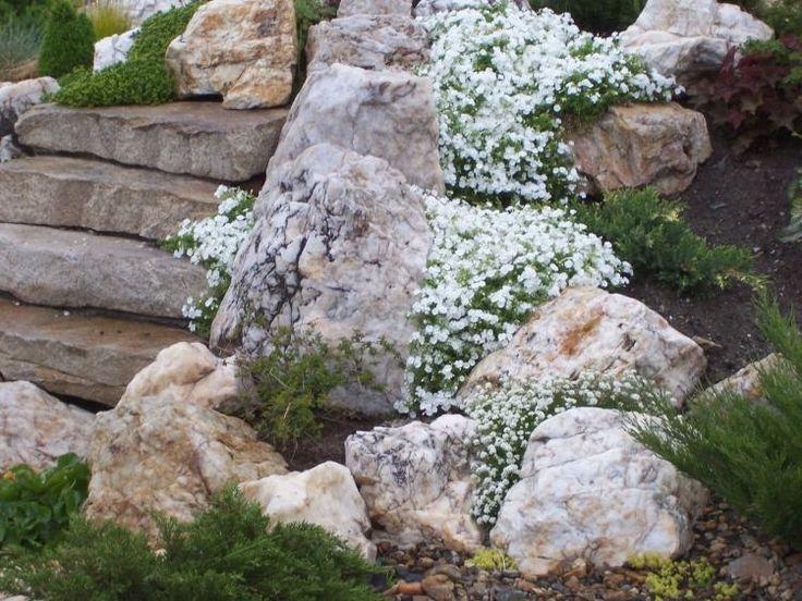 Steingarten Pflanzen Gansekresse Weiss