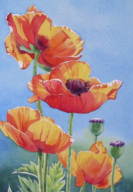 Barbara Fox - oriental poppies