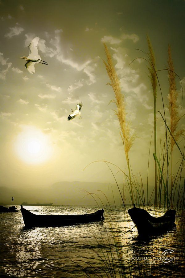Nowhere can man find a quieter or more untroubled retreat than in his own soul. ~Marcus Aurelius
