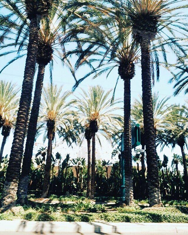 . 週末はすぐそこ🙈✨ ズキュンな写真を見て 気分上げます🌴💓 . 先日大好きな人から 嬉しいニュースを聞きました😽 これ以上のハッピーは 無いでしょってくらい嬉しくて 飛び跳ねそうになりました🙈 幸せをシェアしてくれて ありがとうのキモチでいっぱい🤗 また再会する日まで私も頑張る✨ . . #LA #losangeles #California #CA #californialove #love #travel  #travelgram #america #USA #heaven #peace #sunny #beautiful #awesome #amazing #yoga #trip #life #dream #tbt #day #happiness #カリフォルニア #パームツリー #海外 #トラベル #アメリカ #青空 #ロサンゼルス by (milifornia). awesome #love #sunny #life #usa #happiness #heaven #カリフォルニア #ca #青空 #america #beautiful #アメリカ…