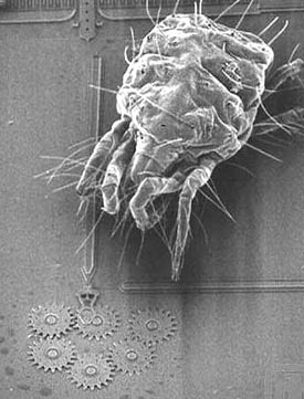Using technology developed to construct microchips, engineers can now construct microscopic machinery (like the gears shown in this electron microscope image, dwarfed by a mite). Future generations of nano-machinery promise to be even smaller. Source: Sandia National Laboratories.