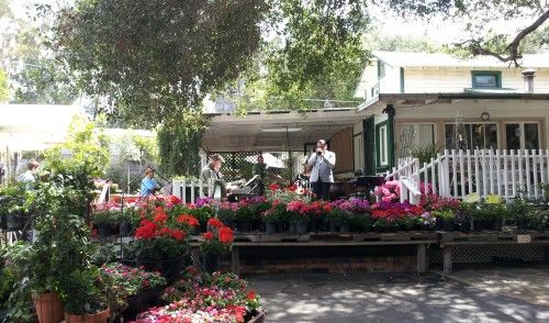 17 best images about fallbrook ca on pinterest legends Myrtle creek botanical gardens nursery