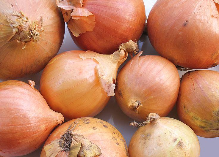 Oignons - Recettes Le Guide Cuisine