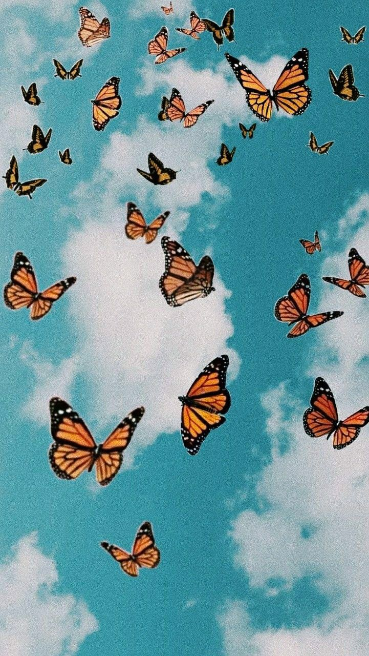 Pin By Dakota Lauer On Wallpapers Butterfly Wallpaper Cute Patterns Wallpaper Butterfly Wallpaper Iphone