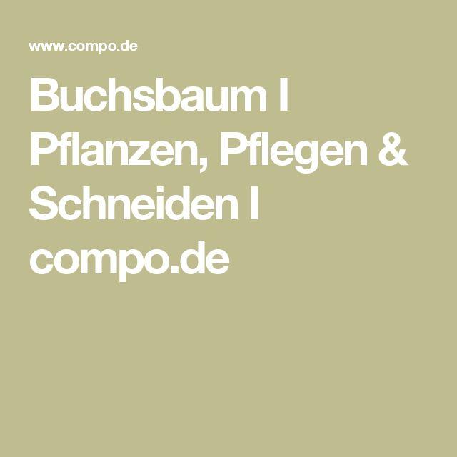 Buchsbaum I Pflanzen, Pflegen & Schneiden I compo.de