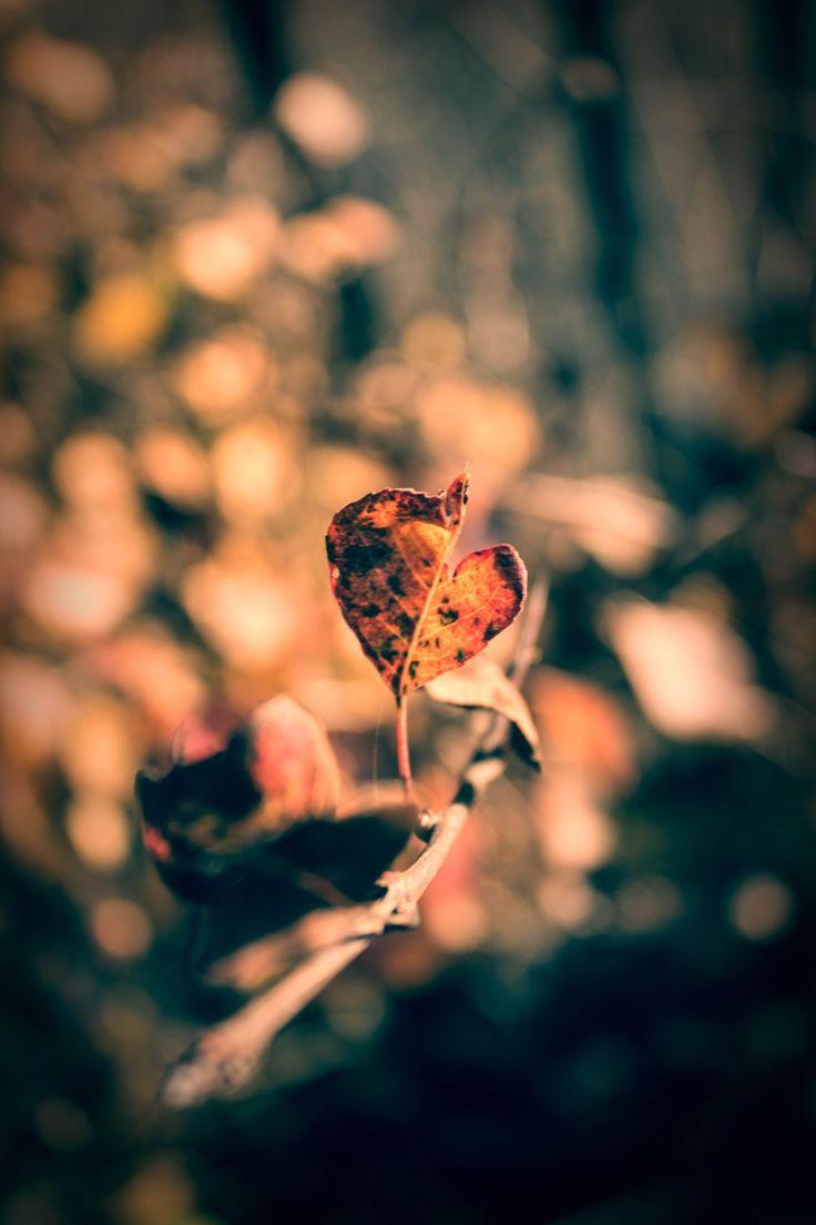 Autumn by Tătar Dennis Marian on 500px