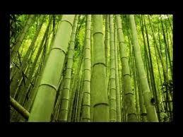 L'hydrolat de bambou (Phyllostachys Nigra) U n hydrolat à tester absolument, dès la première application la peau se fait velours ! U ne merveille pour les peaux ultra-sensibles ! Voici ses bienfaits : H ydrolat de feuilles de bambou cultivé dans le piémont...