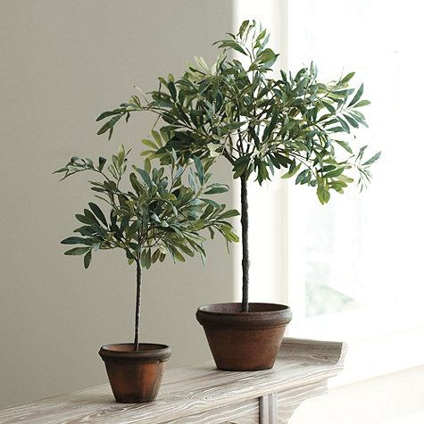 Bring classic Mediterranean style to your home with a traditional olive tree. The best part? Ours is maintenance-free. Shop Ballard Designs today.