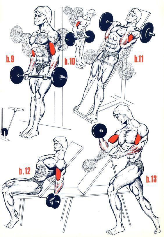 Все упражнения на бицепс в картинках