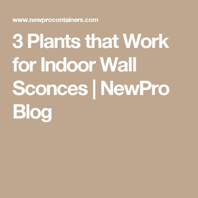 3 Plants that Work for Indoor Wall Sconces | NewPro Blog