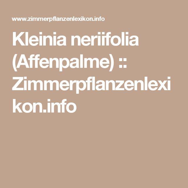 Kleinia neriifolia (Affenpalme) :: Zimmerpflanzenlexikon.info