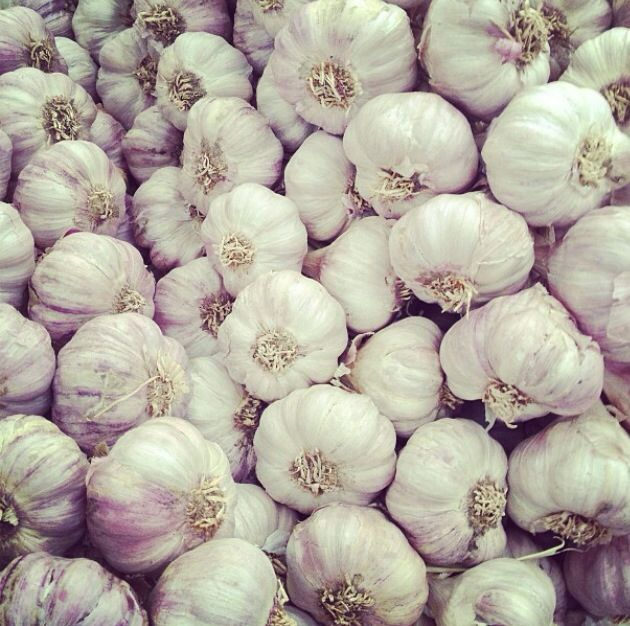 //garlic
