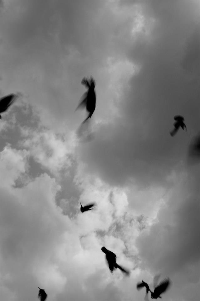 Birds in Mexico by Conrad Coetzee