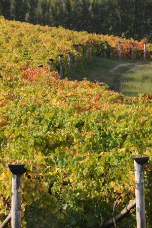 Lerida Estate Winery, Canberra District, Australia