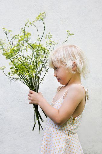 Fennel bouquet - Google Search