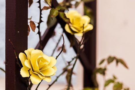 Růže můžete přilepit ke stonku nasušených růží nebo je můžete použít jako ozdoby na dárkové krabičky, nebo třeba dekorativní košíky; Eva Malúšová