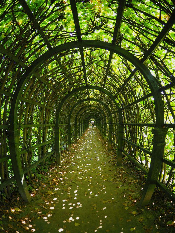 Green tunnel by Alexander Polomodov on 500px