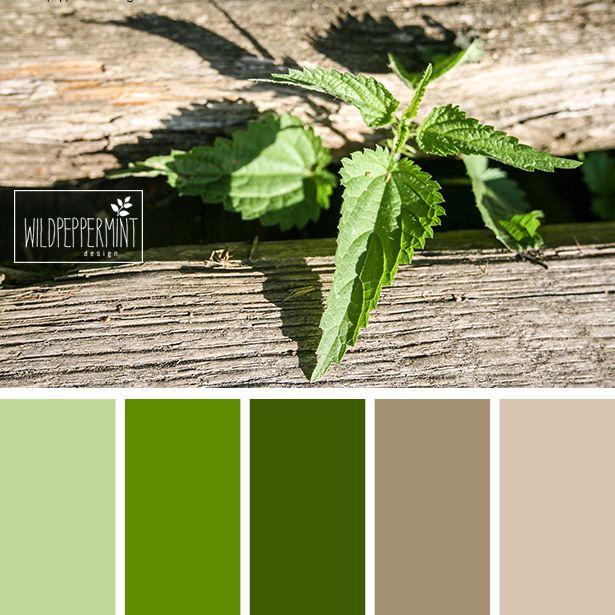 #Farbpalette, #Grüntöne, #Beige, leicht und frisch, Brennessel, altes Holz, #sommerlich, Farbinspiration // © wildpeppermint-design.de