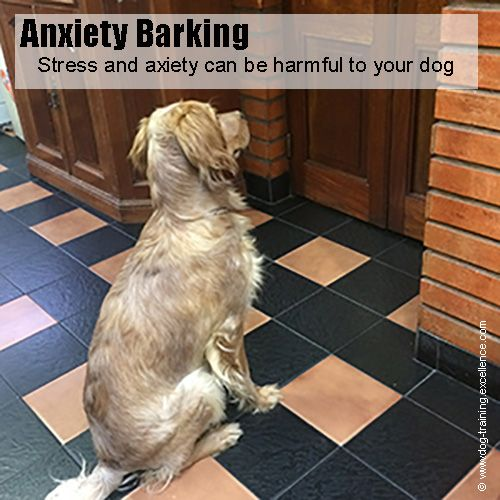 13 ways to get your dog to stop barking - Best Way To Stop A Dog From Barking