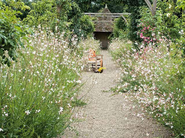 3 massifs à semer en été pour fleurir le printemps prochain - Une allée estivale