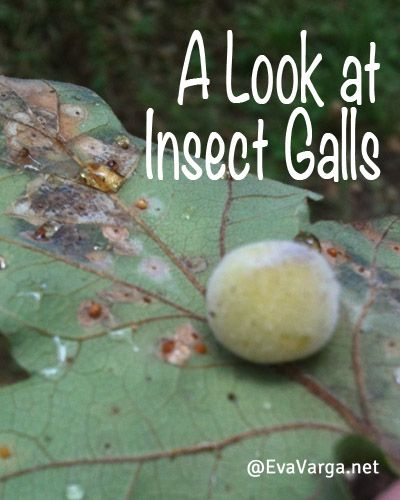 symbiotic relationship between plants and insects for kids