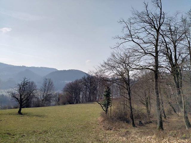 Der Frühling kurz vor der Explosion.  #Naturmomente #Schweiz #photooftheday #magicplaces #kraftorte #switzerland #switzerlandpictures #magicswitzerland #nature #naturelovers #forest #sky
