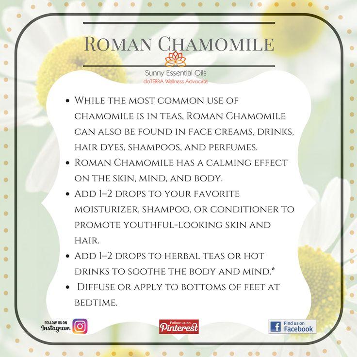 Roman Chamomile Essential Oil Facebook: https://www.facebook.com/sunnyessentialoils/  Instagram: @sunnyessentialoils