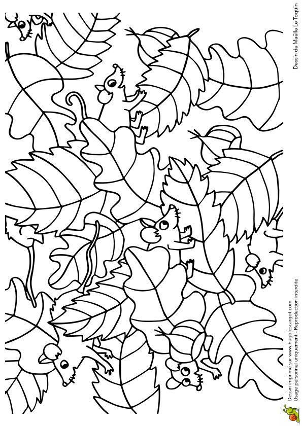 Coloriage cache cache feuilles mulots sur Hugolescargot.com - Hugolescargot.com