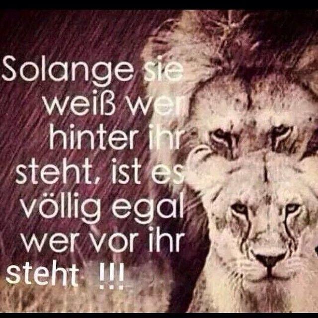 #ShareIG Mega gut #löwe #löwin #spruch #zitat #stark #woman #man #frau #mann #gut #super #nachdenklich #köln #deutschland #wuppertal #berlin #münchen #hamburg #paar #liebe #treu #ergeben #zusammen #partnerschaft