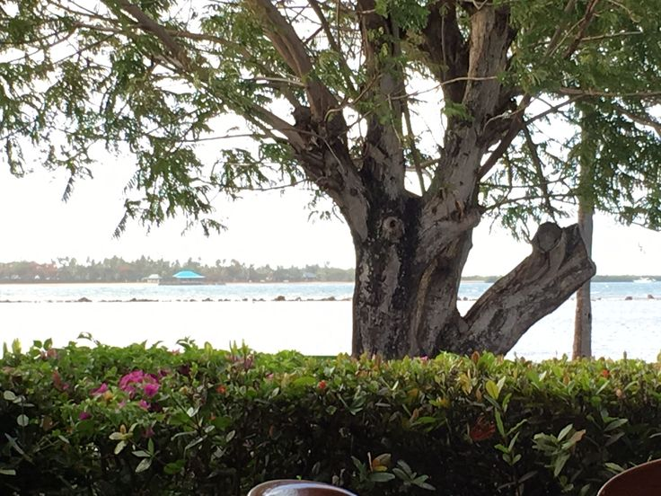 View from Tanoa Waterfront Resort, Fin's Restaurant  Latauko, Fiji