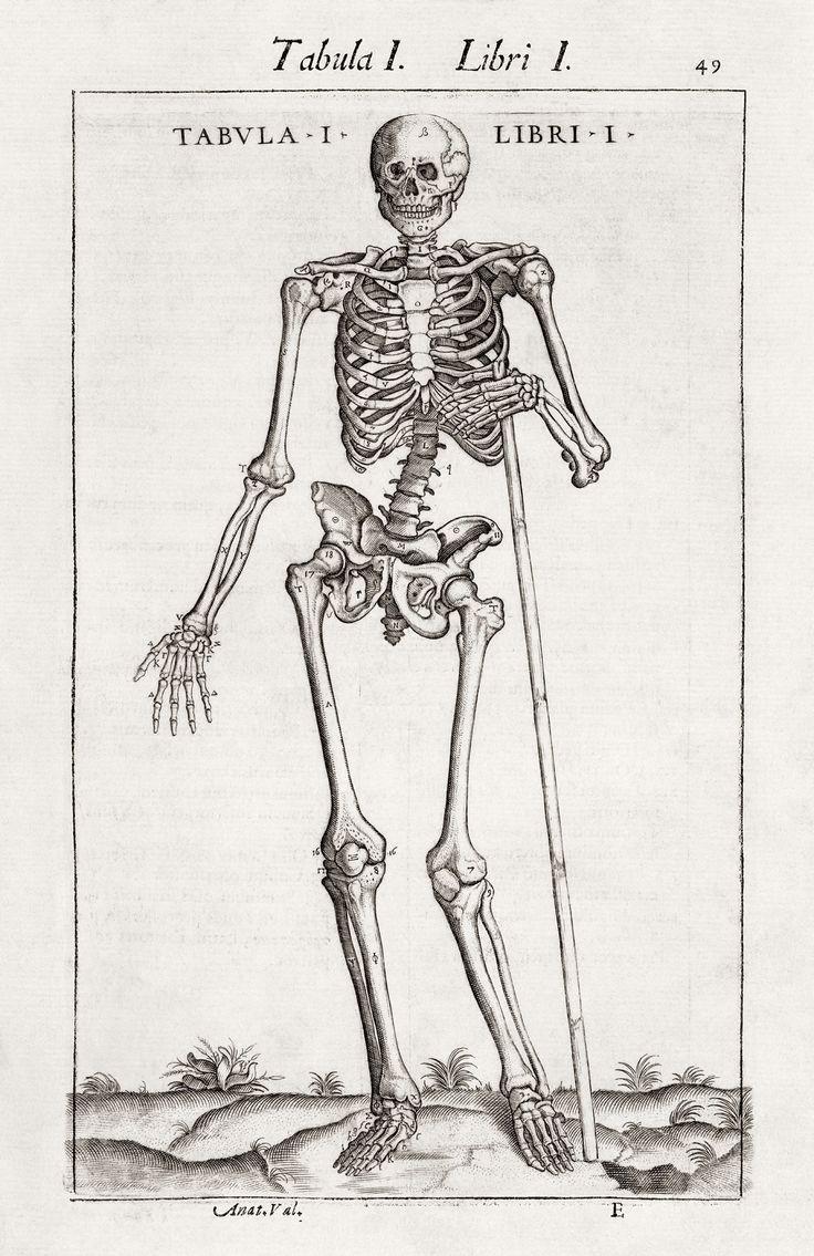 30 Best Anatomie Images On Pinterest Human Anatomy Anatomy