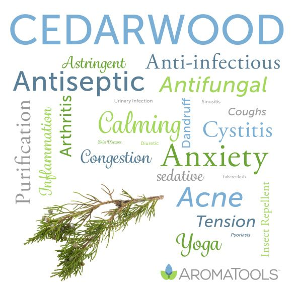 aroma tools spotlight   essential oil spotlight   AromaTools™ Blog