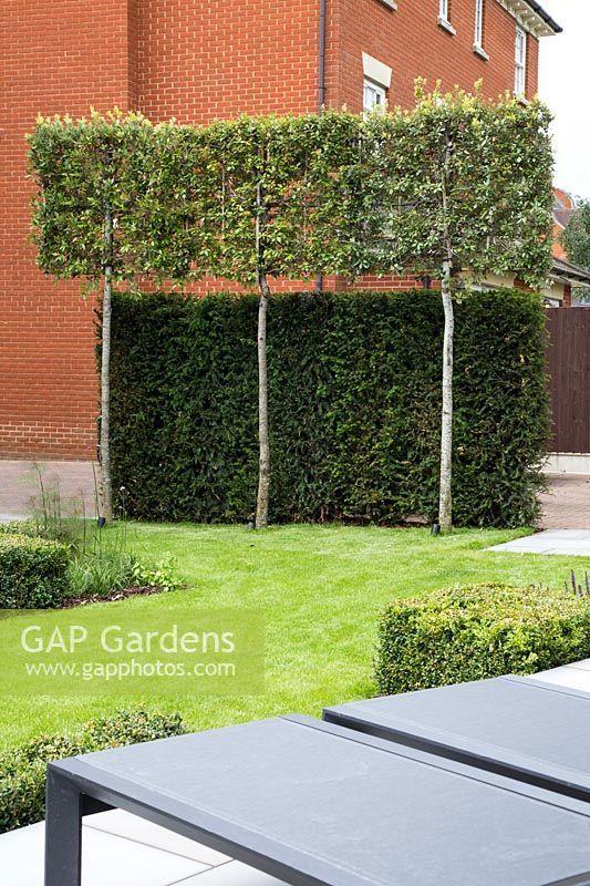 Spalierbaume Und Eibenhecke Die Einen Schirm Von Den Nachbarn Schaffen Baume Garten Kleiner Garten Plane Garten Terrasse
