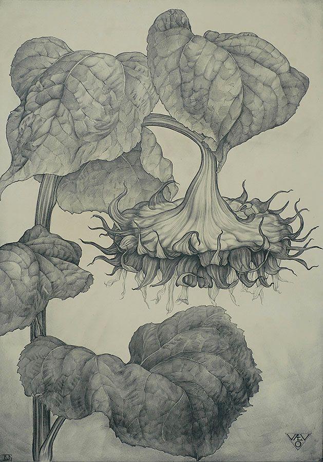 Dirk Van Gelder(Dutch, 1907-1990) Sunflower(Zonnenblem) 1925 Lithograph