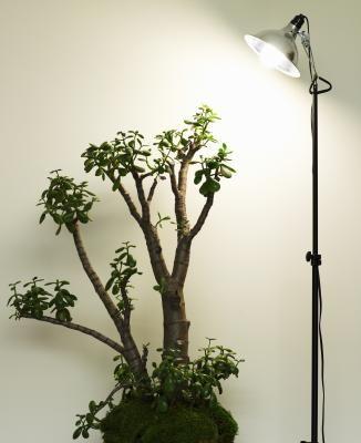 Cómo propagar plantas de jade a partir de esquejes | eHow en Español