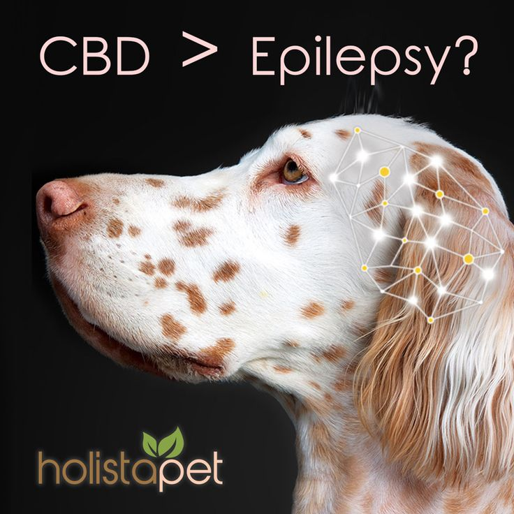 CBD > Epilepsy? The number of dog seizures have been declining over the years and many Cannabidoil is responsible! #dogs #CBD #epilepsy