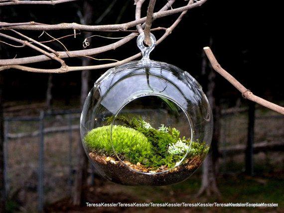 Hanging Glass Globe DIY Moss Terrarium Kit-Live Assorted Moss Lichens & Glass ball included-Wedding Decor