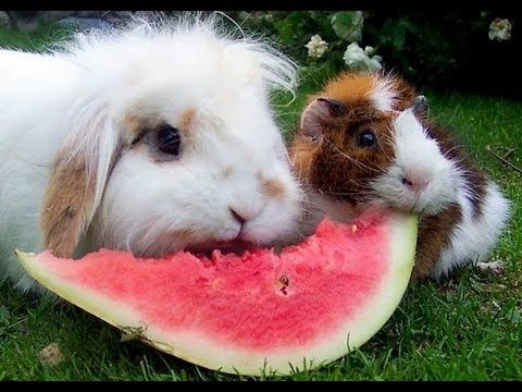 Animals Enjoy Eating Watermelons - Compilation