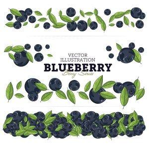 BLUEBERRY VECTOR ILLUSTRATION SET - http://freepicvector.com/blueberry-vector-illustration-set/