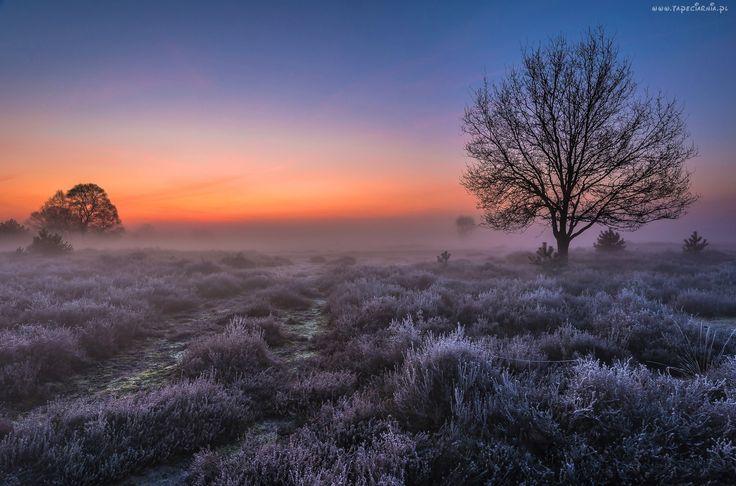 Świt, Mgła, Wrzosowisko
