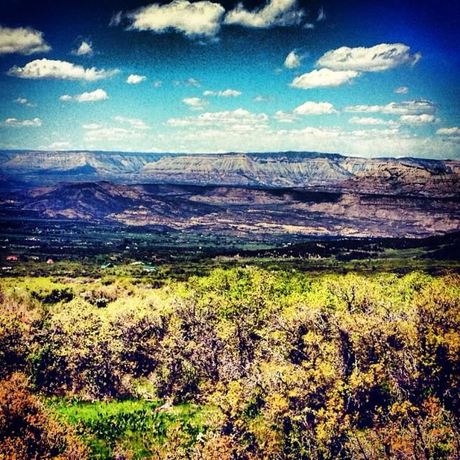 Colorado Mesa University: 88 Best Colorado Wildlife Images On Pinterest
