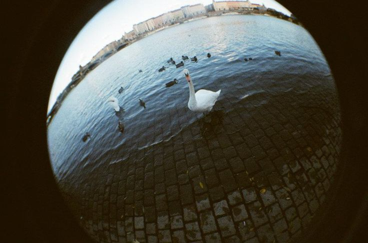 lomography fish eye