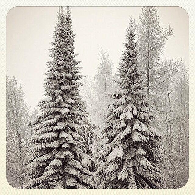 ❄️Let it snow!❄️ #letitsnow #snowychristmas #dreaming #winter #wonderland #cold #snow #white #christmas #happy2015 #klaidrajewelry