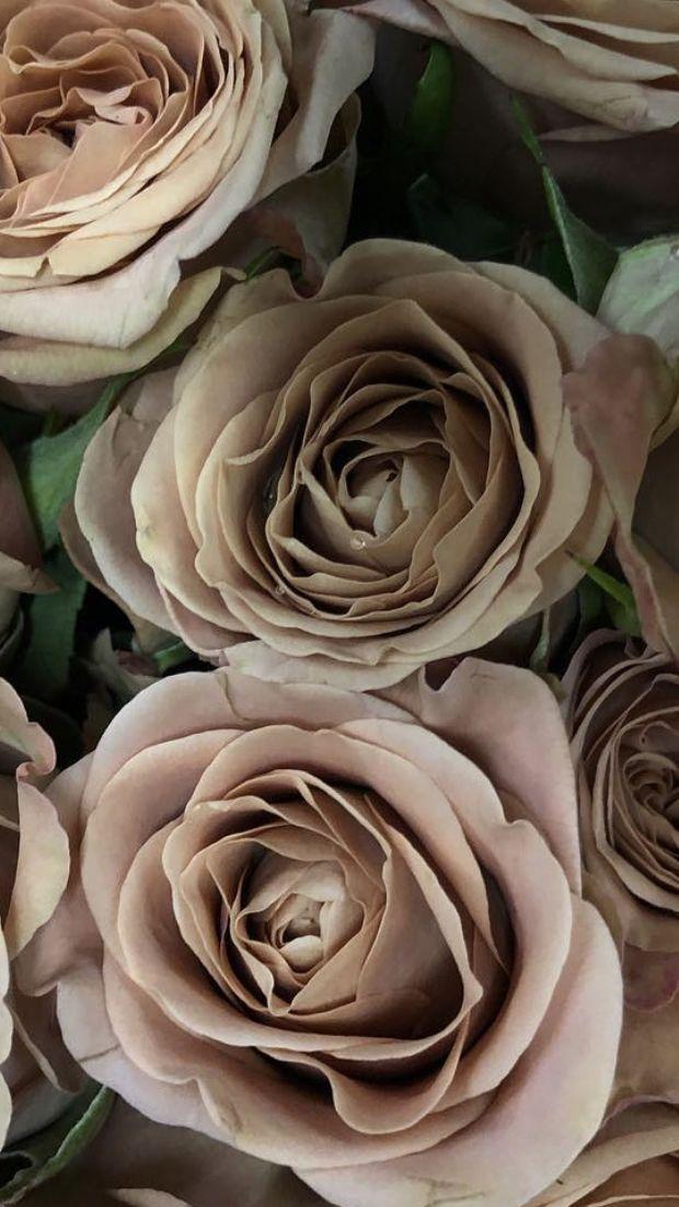 Wholesale Flowers Wholesale Flowers Diy Wedding Flowers Flowers