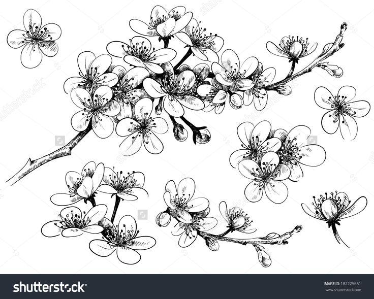 Hand Drawn Cherry Blossom Stickers transfer Pinterest