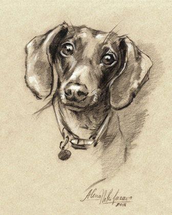 PRINT Dog Dachshund portrait. Doxie-7. Sketch~Drawing by Alena Nikifarava