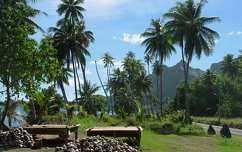 Kókuszdiók, Bora Bora, Francia Polinézia