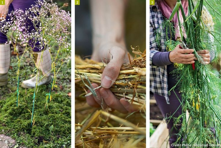 Les 76 meilleures images du tableau jardin sur pinterest for Joli jardin sans entretien